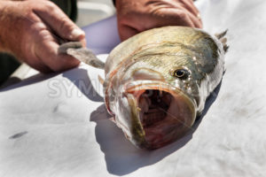 Catch of the day - Stock Images 4 You