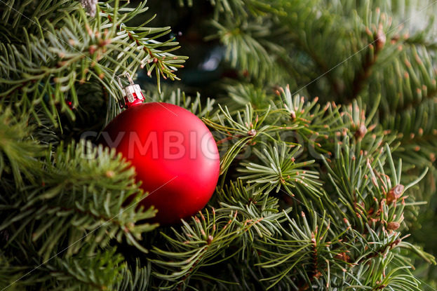 Christmas ornament is on the treet – Stock Images 4 You