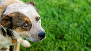 Dog looking up at you - Stock Images 4 You