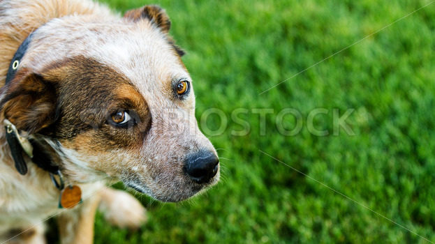 Dog looking up at you – Stock Images 4 You