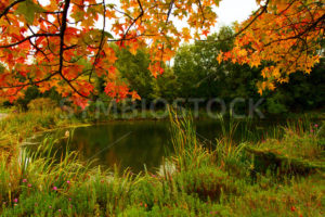 Fall Colors at the pond - Stock Images 4 You
