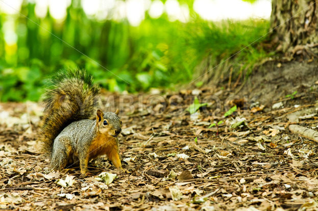 Four legged friend the squirrel getting ready to run – Stock Images 4 You