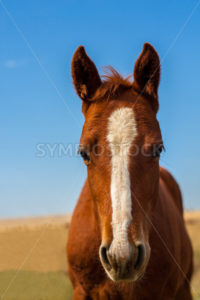 Head shot of a horse - Stock Images 4 You