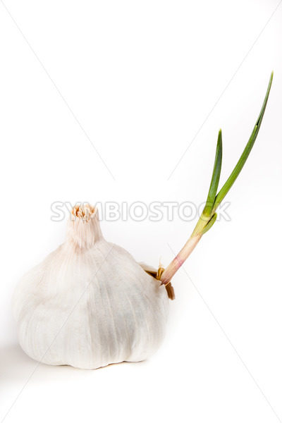 Healthy organic garlic that has sprouted – Stock Images 4 You