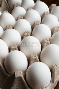 Lots of eggs - Stock Images 4 You