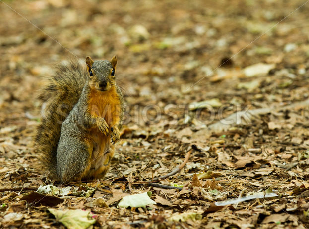 Squirrel standing at the alert – Stock Images 4 You