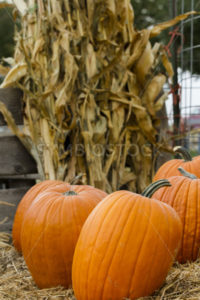 Time to pick your pumpking - Stock Images 4 You