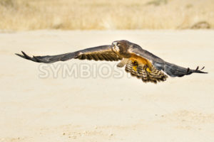 bid flying low to the ground - Stock Images 4 You