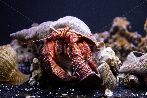crab underwater  – Stock Images 4 You
