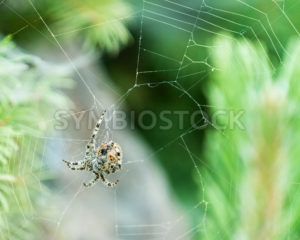 spider hanging on a web - Stock Images 4 You