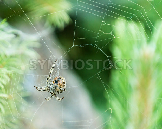 spider hanging on a web – Stock Images 4 You