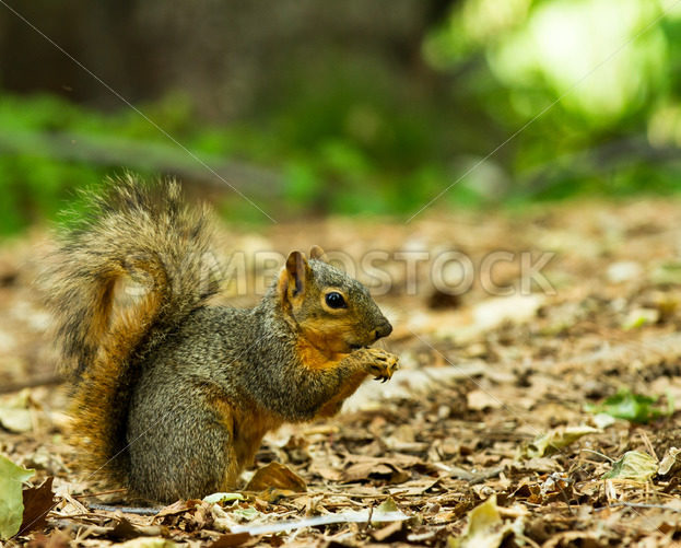 squirrel eating a piece of food  – Stock Images 4 You