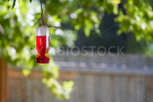 Bird feeder hanging from a tree branch - Stock Images 4 You