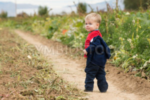 Boy walking through the field - Stock Images 4 You