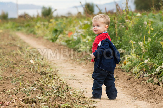 Boy walking through the field – Stock Images 4 You