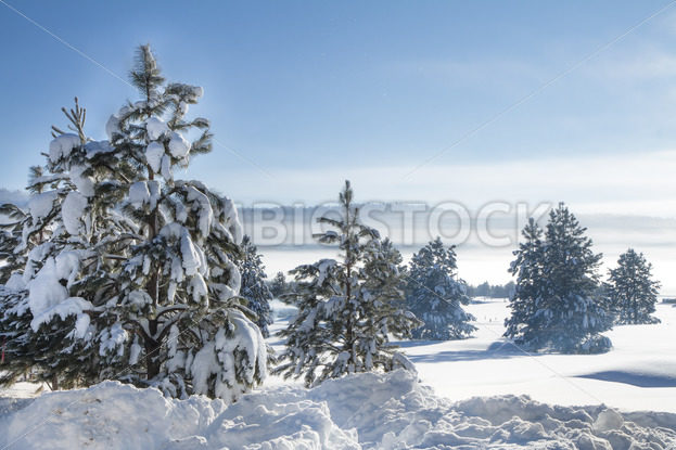 Cold winter morning – Stock Images 4 You