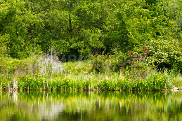 Collection of trees near the river bank – Stock Images 4 You