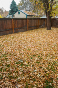 Fall leaves all about the yard - Stock Images 4 You