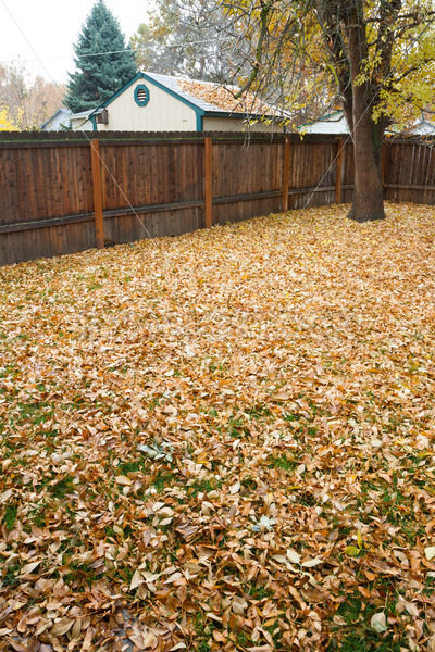 Fall leaves have takenn to the ground – Stock Images 4 You