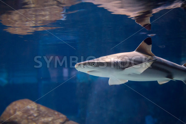 Shark looking for a meal – Stock Images 4 You