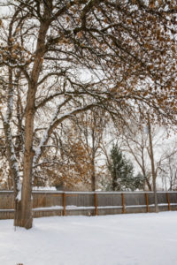 Snowy back yard - Stock Images 4 You