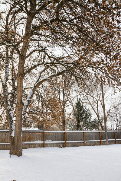 Snowy back yard. – Stock Images 4 You