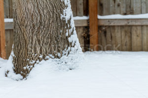 Tree covered in snow during winter time - Stock Images 4 You