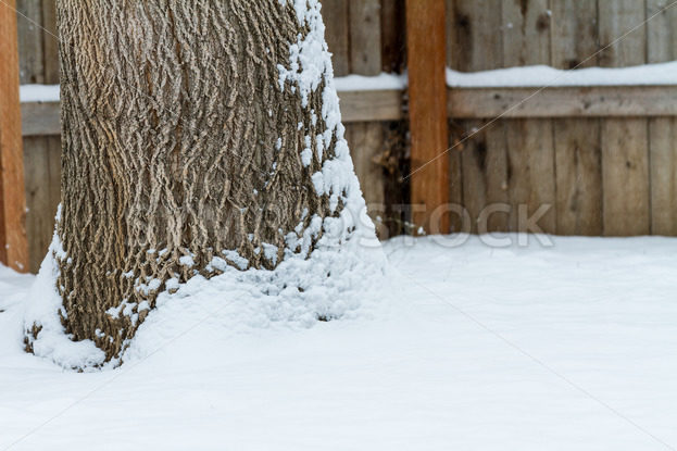 Tree covered in snow during winter time – Stock Images 4 You