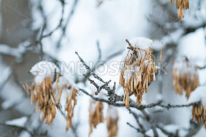 snow on a tree - Stock Images 4 You